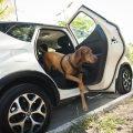 Cómo viajar con perros