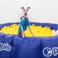 ¡Así festejamos el Día del Cachorro en Puppis!