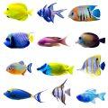 Mi primer pez: ¿cuál escoger?