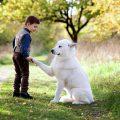 SOS padres: ¿qué hacer cuando los hijos piden una mascota?