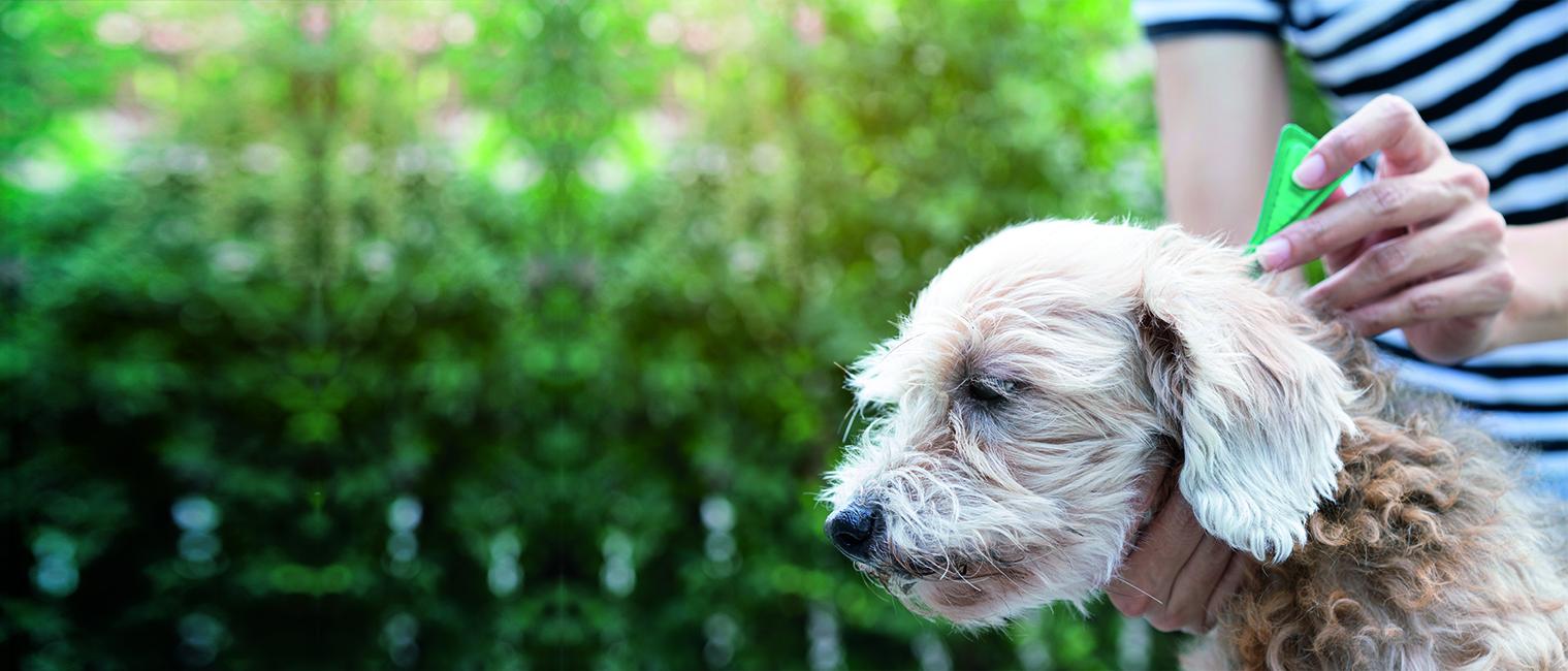 ¿Cuál es el mejor antiparasitario para mi perro?